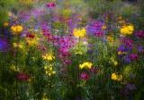 Isten kertje, ahova jövedelmezően vethetsz
