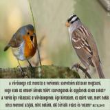 Két madár beszélget